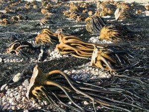 Meeresfrüchte am Pazifischen Ozean, PERU